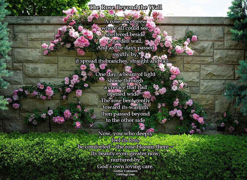 roses-wall