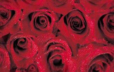 bg_roses_4