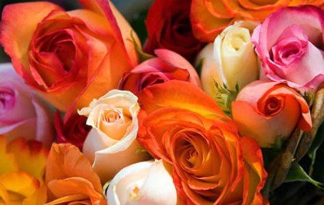 roses_3