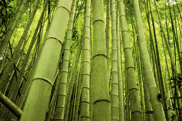 The Fern and the Bamboo