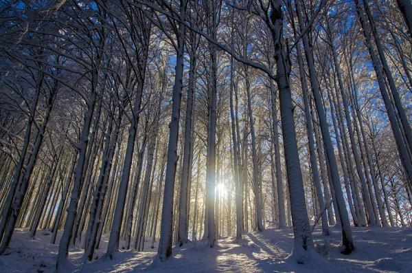 winter-landscapes-16-600x397