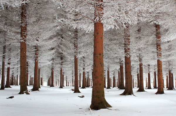 winter-landscapes-9-600x395