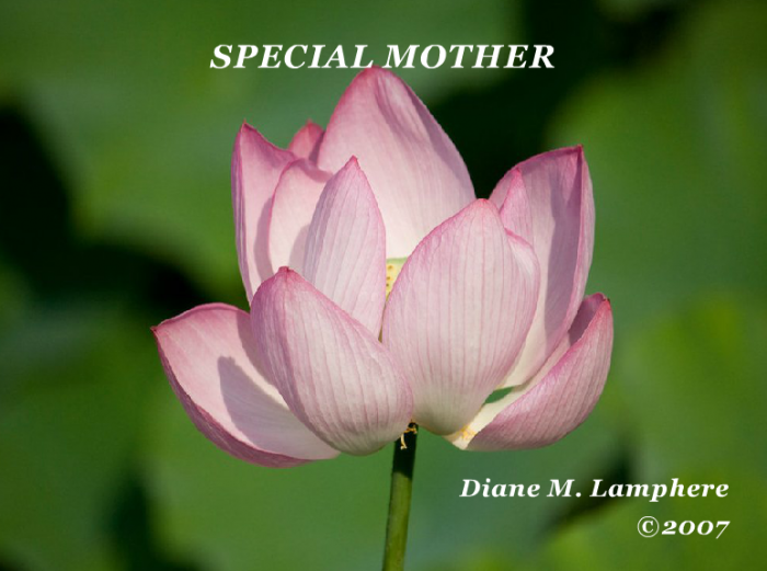 Special Mother
