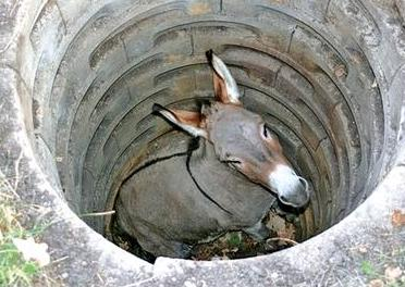 Old Mule in a Well