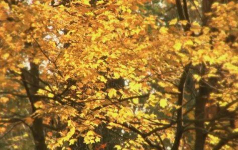 the-beauty-of-autumn thumbnail