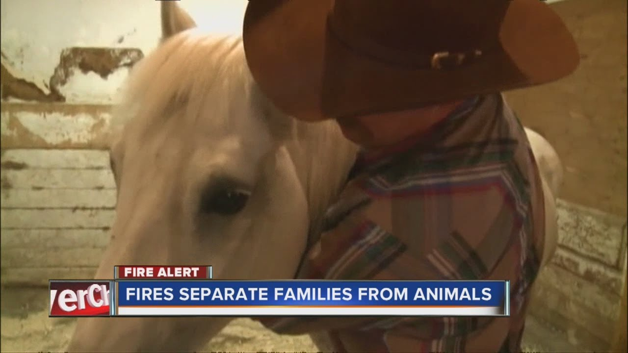 Cowboy Reunited with Horse from Black Forest Fire