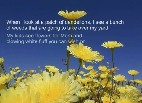 Mud Puddles and Dandelions
