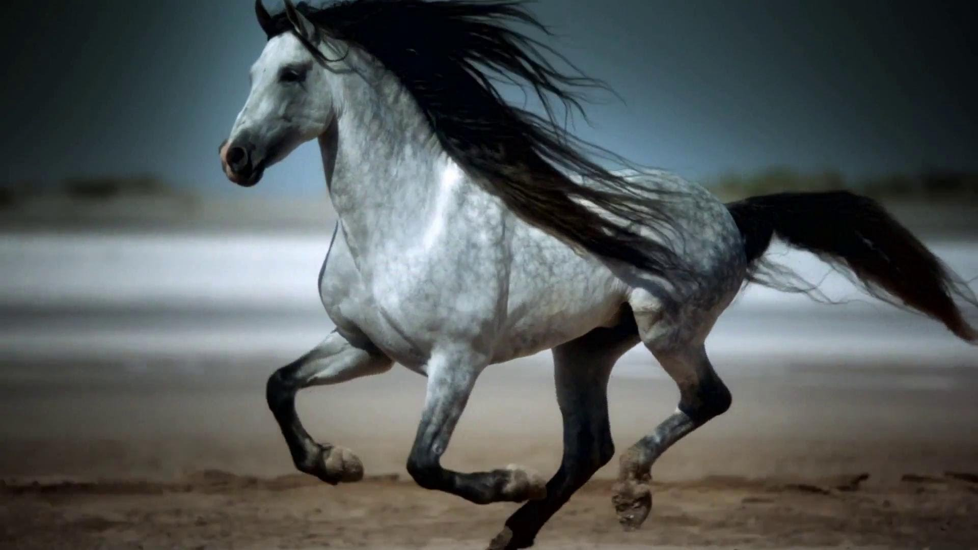 Amazing Galloping Horses