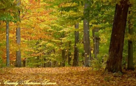 Eva Cassidy – Autumn Leaves