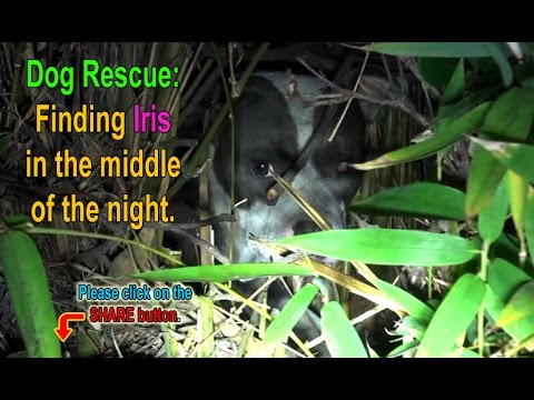 An Unexpected Surprise Dog Rescue