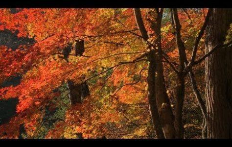 Autumn Piano Music