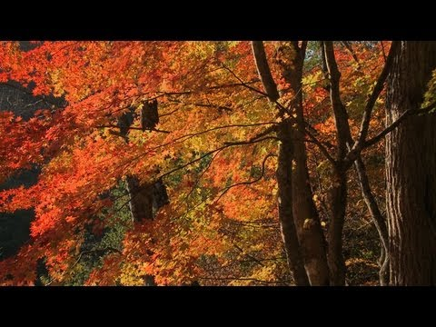 Autumn Piano Music