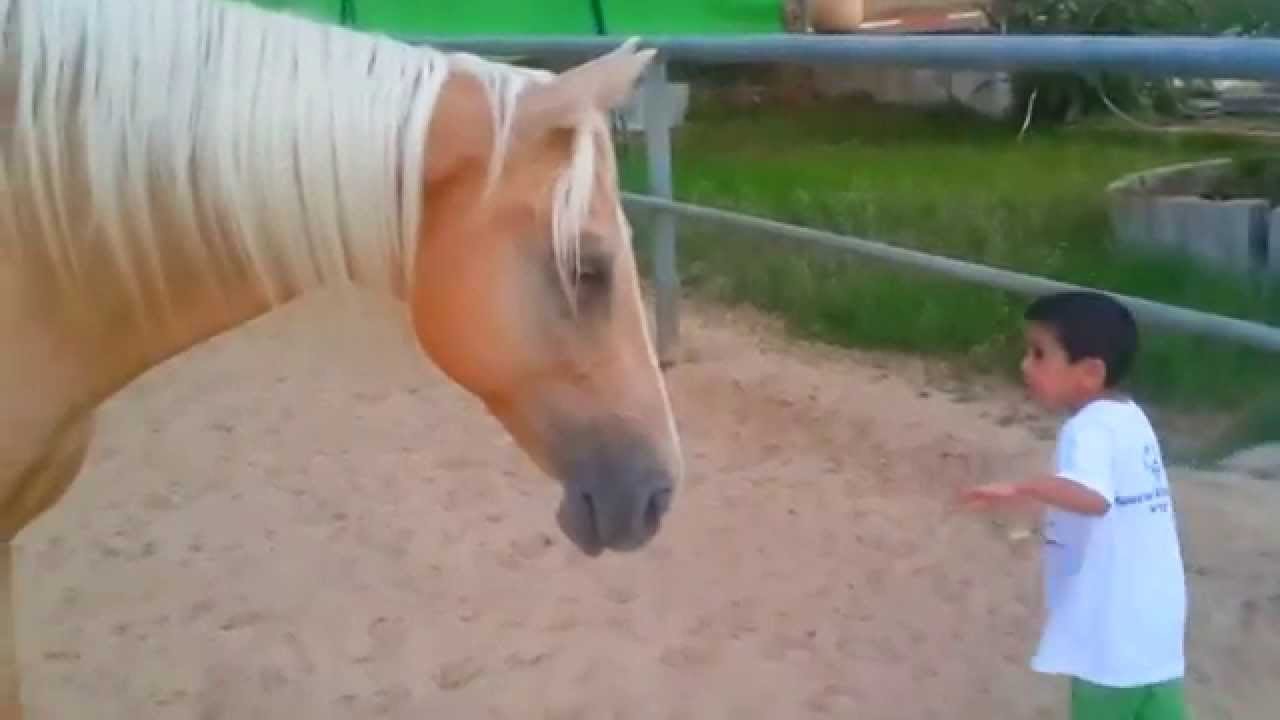 Boy with Williams Syndrome Creates Nonverbal Communication with a Horse