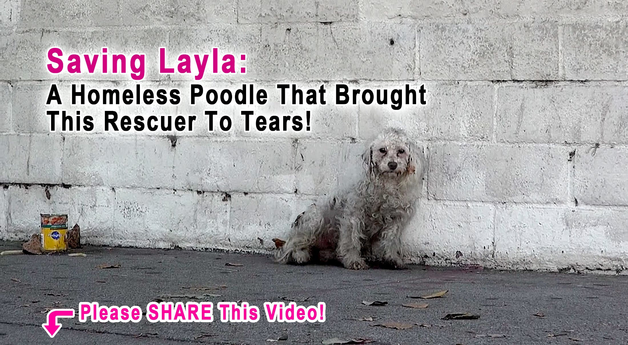 Brought to Tears by a Homeless Poodle