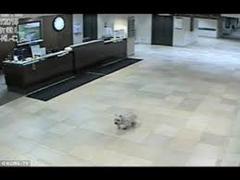 Dog Walks Alone to Owner in Hospital in Iowa