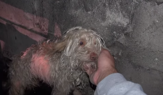 Saving Bitty: A Scared Homeless Dog Hidden in a Sewer Tunnel