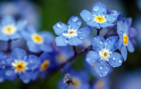 Spring Time – 4K UHD