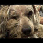 Benji was homeless his whole life… WATCH what happens next! Please share.