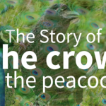Beautiful Story: The Crow and the Peacock