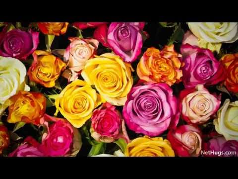 Roses from Heaven
