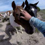 Wild Mustangs – A Legacy in 4K