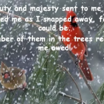 Snowflakes and Miracles