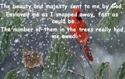 snowflakes-miracles