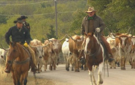 Cattle-Drive-Texas-Country-Reporter