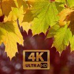Fall Foliage 2017 Seattle 4K UHD