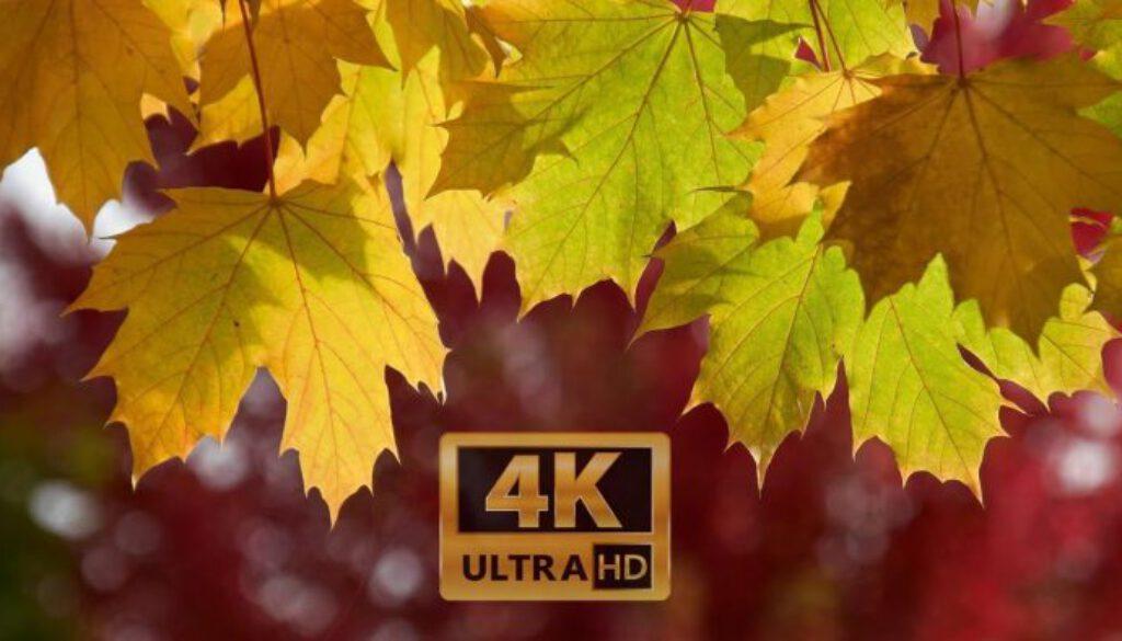 Fall-Foliage-2017-Seattle-4K-UHD