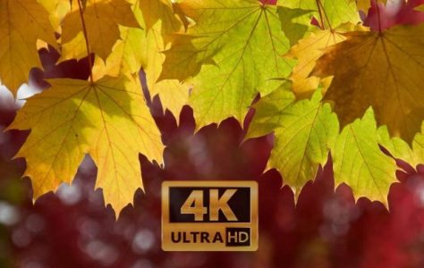 Fall-Foliage-2017-Seattle-4K-UHD