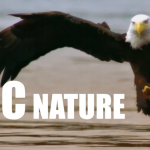 Our Planet: Supercut of BBC Natural History Programming