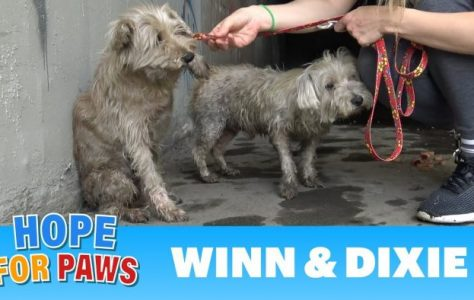 Two-dogs-in-the-sewer-cried-for-help-until-someone-heard-them