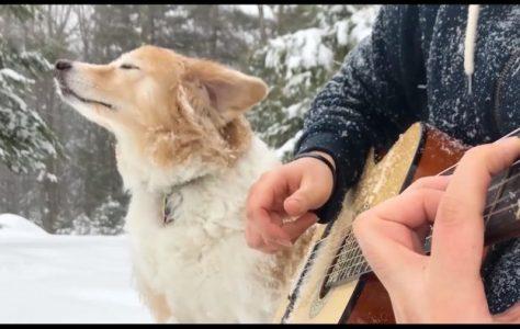 A Dog, a Guitar and La La Land