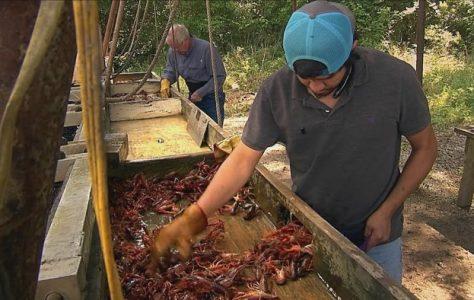 Texas Crawfish Farm