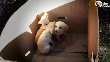Man Pulls Puppies Out of Trash Every Single Day