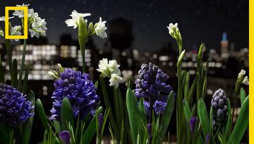 Absolutely Breathtaking Flower Garden Time-Lapse