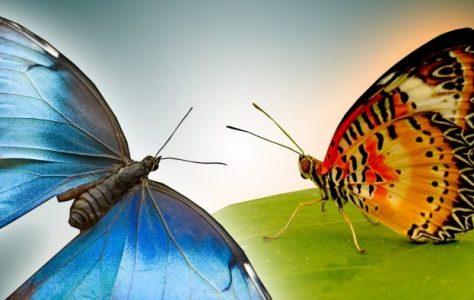Butterflies in Slow Motion