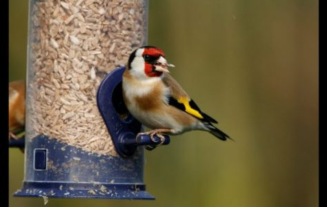 How to Attract Birds to Your Garden Tutorial
