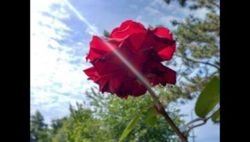 My Aching Heart – Stephen Meara-Blount