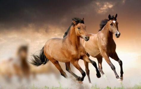 APACHE The Shadows – Beautiful HORSES