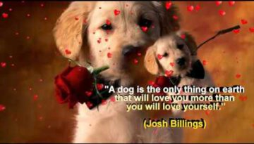Dog Lovers Say