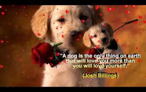 Dog Lovers Say