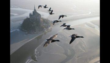 Amazing Flight With Birds on Board a Microlight Plane