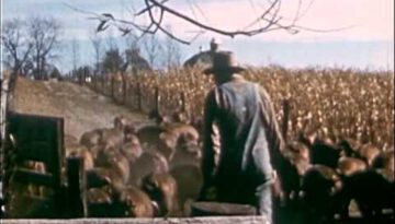 This Is Life (1950)