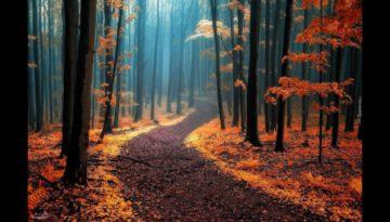 Autumn Leaves – Frank Sinatra