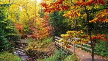 Autumn Leaves – Nat King Cole